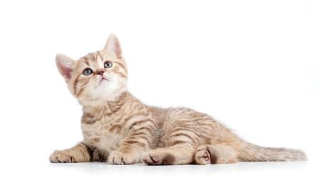 cute baby kitten lying on floor Stock Photo - 13550038