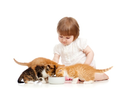 kid feeding cats with milk photo
