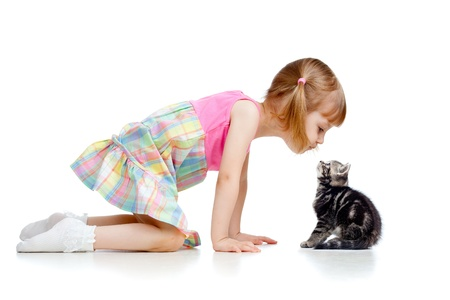 funny little girl kid playing with Scottish kitten Stock Photo - 13772500