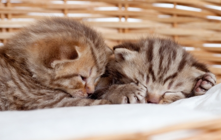 Adorable two sleeping small kittens in wicker basket photo