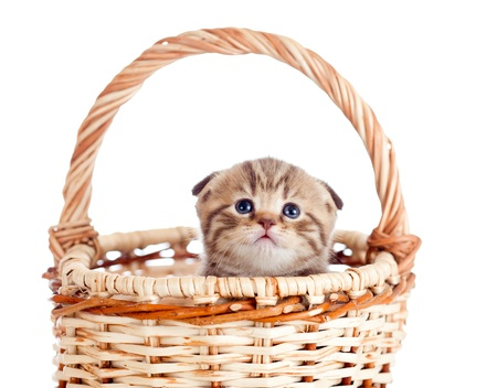funny baby cat sitting in basket photo