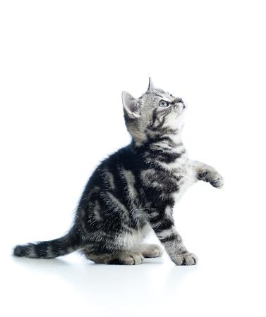 playful baby cat isolated on white background photo