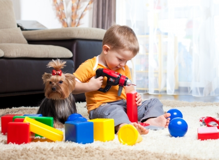 drill floor: Child playing with building blocks at home  York dog sitting near boy
