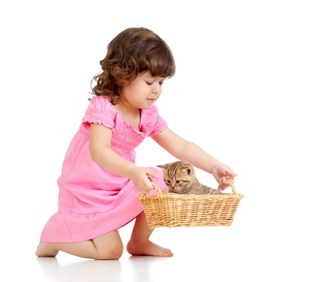 little child playing with Scottish kitten photo