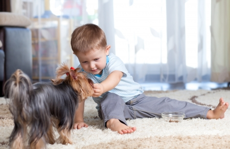 kid feeding dog puppy indoor photo