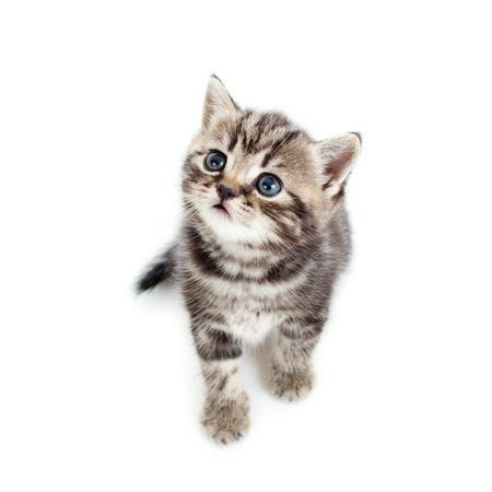 top view of young cat isolated on white background