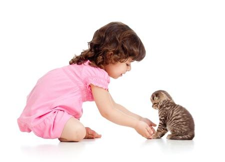 niño pequeño jugando con Scottish gatito Foto de archivo