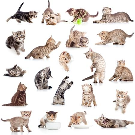 흰색 배경에 격리 된 재미 장난 고양이 새끼 고양이의 컬렉션