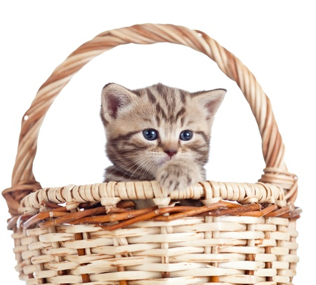 Funny small kitten in wicker basket photo