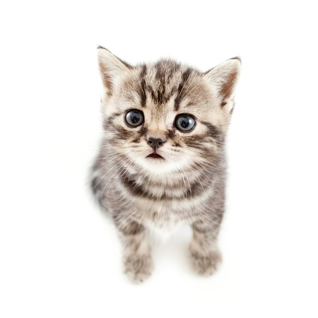 top view of baby cat kitten isolated on white background photo