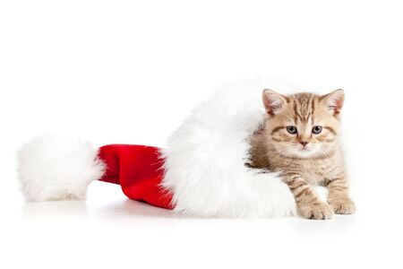 little cat kitten in a Christmas santa claus hat on a white background photo