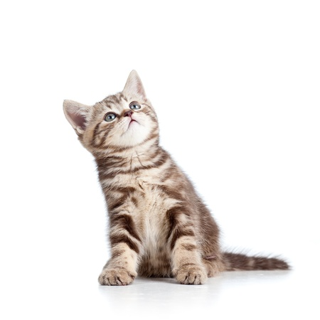 charming cat kitten looking up