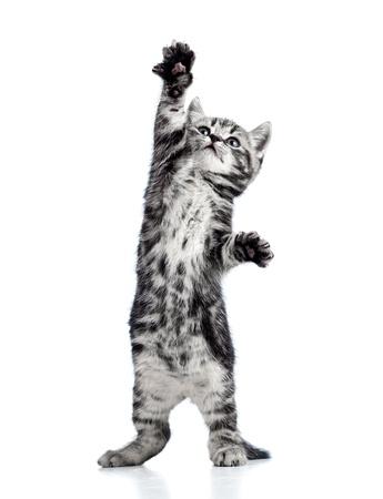 grappige speelse zwarte kat kitten geïsoleerd op wit