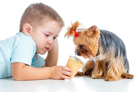 boy kid feeding dog isolated on white background photo