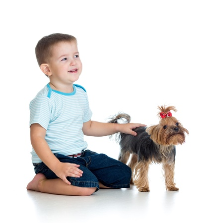 smiling child playing with a puppy dog isolated on white photo