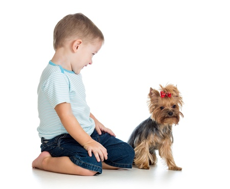 smiling child boy playing with a puppy dog isolated on white photo