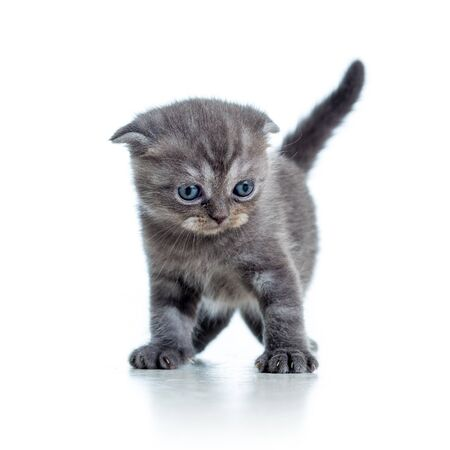little cat kitten isolated on white photo