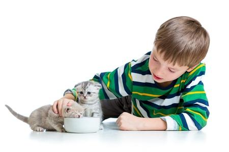 funny child boy feeding cats kittens photo