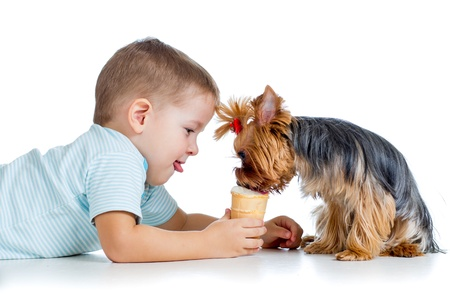 boy kid feeding dog by ice-cream isolated on white background photo