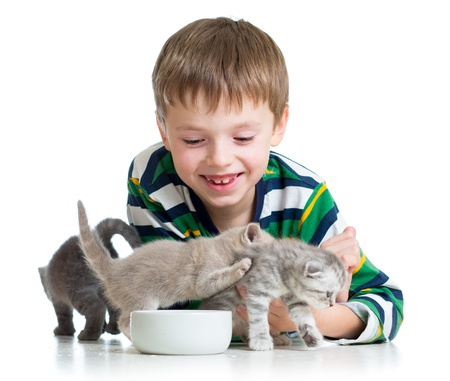 funny child boy feeding cats kittens photo