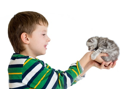 gray cat: child boy holding cat kitten isolated on white background