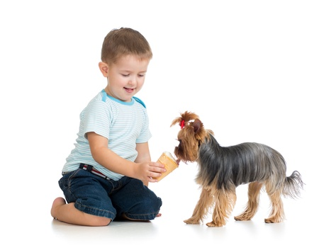 child feeding dog isolated on white photo