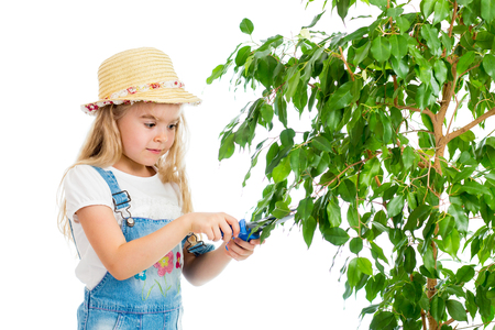 gardener girl cutting leaves from tree photo