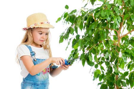 gardener girl cutting leaves from tree Stock Photo - 23116935
