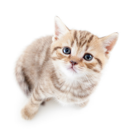 top view of cat kitten on white background photo