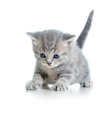 funny walking cat kitten photo