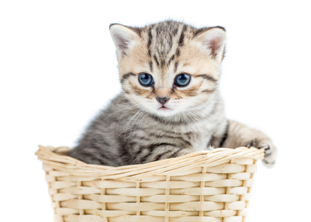 small kitten in wicker basket photo