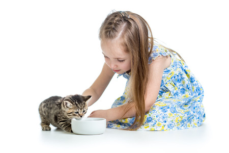 funny child boy feeding cats kittens