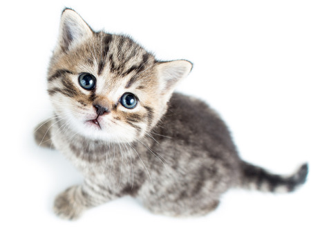 top view of baby cat kitten on white background photo