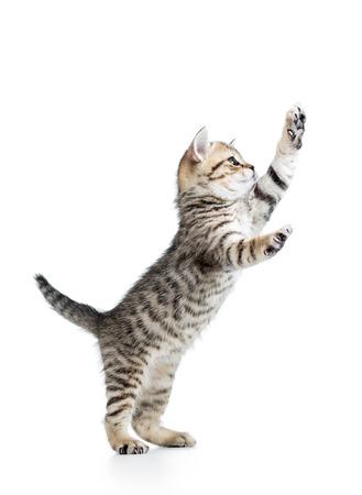 面白い遊び心のある猫が立っています。