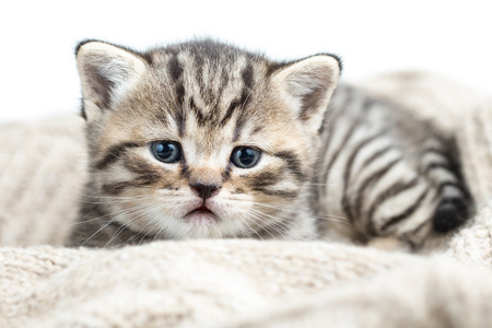 baby cat kitten lying on jersey photo