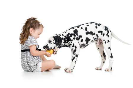 happy baby girl feeding dog isolated on white photo