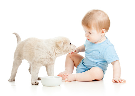 cute baby boy looking at puppy isolated photo