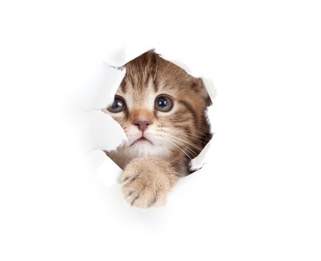 eye hole: kitten looking up in paper side torn hole isolated