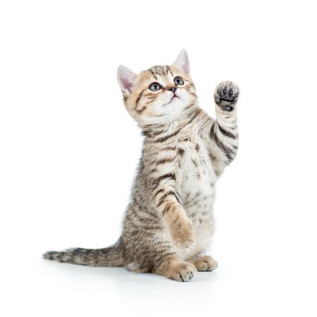 persona de pie: lindo gatito gato juguet�n aislado en blanco Foto de archivo