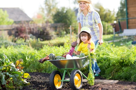 Gardener woman pushing wheelbarrow with kid and vegetables at sunny day