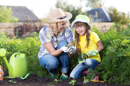 plant nature: Child girl with mom happily picking strawberries at strawberry patch