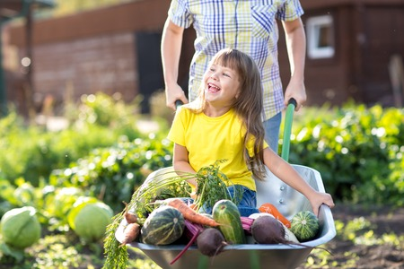 little kid girl inside wheelbarrow with vegetables in the garden photo