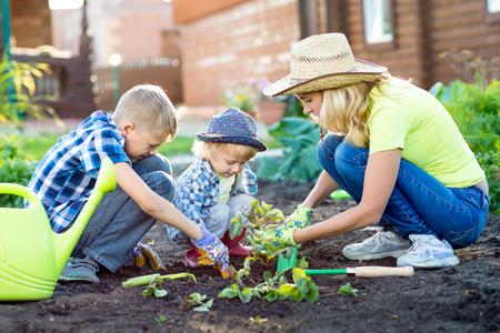 가정의 정원에서 딸기를 심는 어머니와 그녀의 아들 아이들