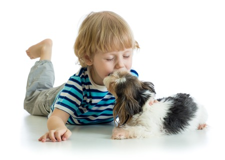 Child little boy kissing puppy dog. Isolated on white background.
