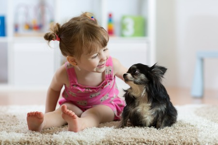小さな犬の黒い毛チワワ犬と子供の女の子