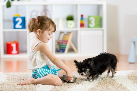 la nia alimenta el perro de chihuahua en el cuarto de nios amigos para mascotas