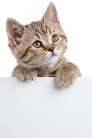 Cat kitten looking up above white banner isolated