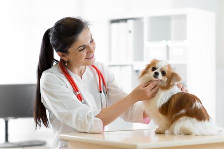 Sourire, femme, vétérinaire, chien, table, vétérinaire, clinique