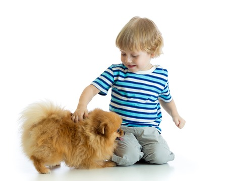 Little kid boy with dog spitz, isolated on white background