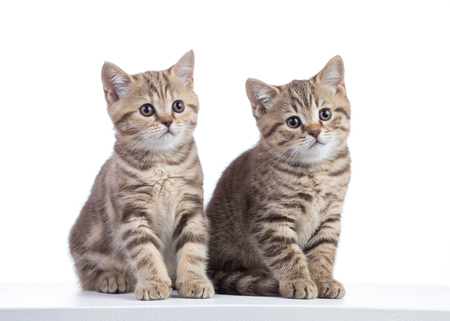Two kittens sitting isolated on white